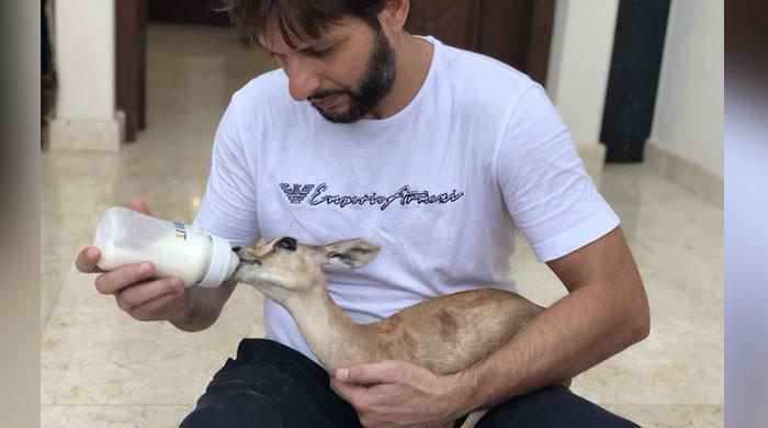 شہریوں کی شکایت پر شاہد آفریدی کے گھر سے جانور ہٹوادیے گئے